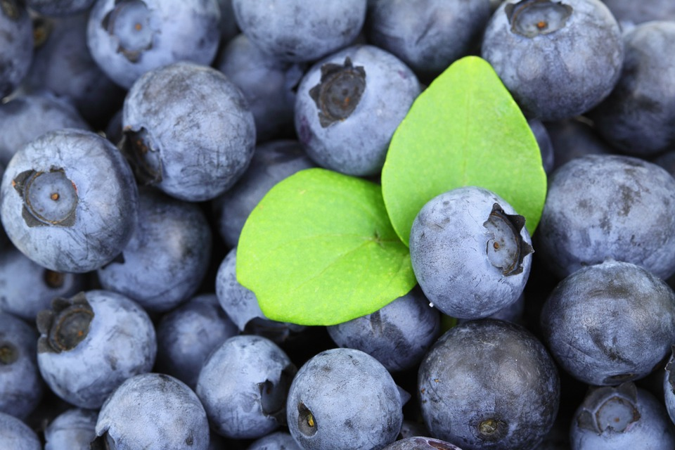 Health Benefits of Blueberries and Other Superfoods for National Blueberries Month